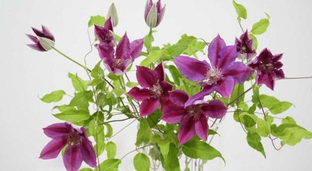 Cut Flowers - Roseville Farms